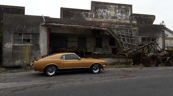 New Zealand Mustang